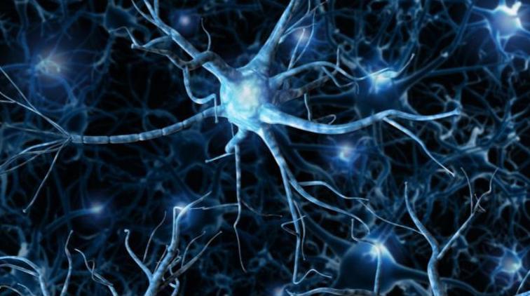 Développer sa posture bienveillante et facilitatrice d'apprentissages grâce aux neurosciences